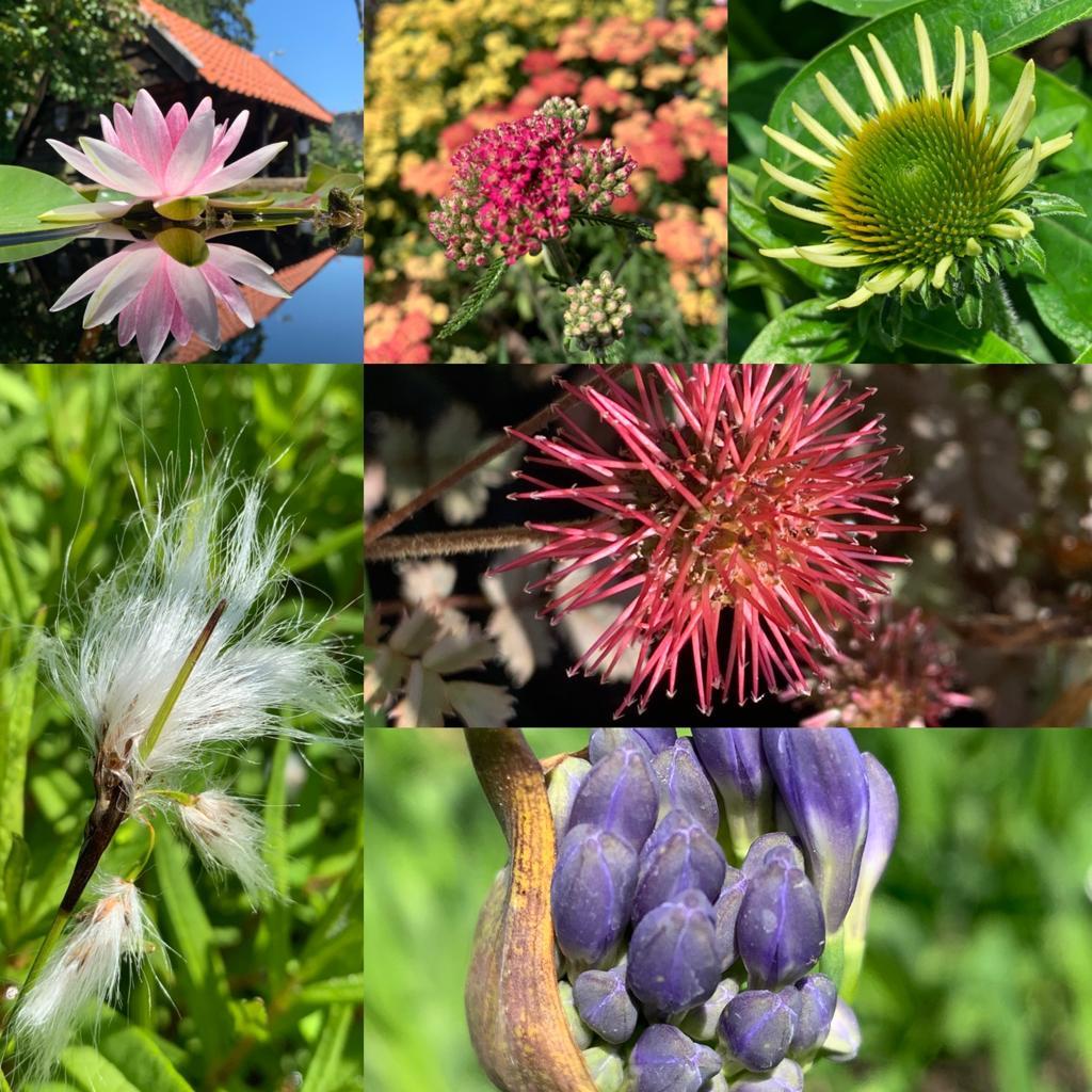 Grote planten 2