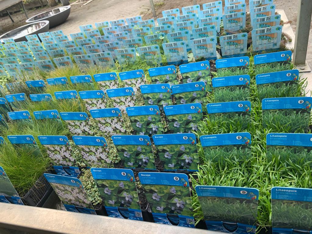 Waterplant 2021 2