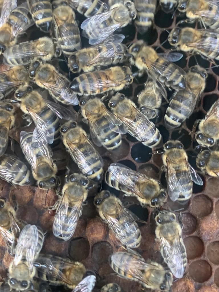 Bijen 3